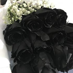 The Black Beauty Collection